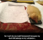 So I Can't Do Any Math Homework Because...