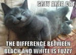 Grey Area Cat. The Difference Between Black And..