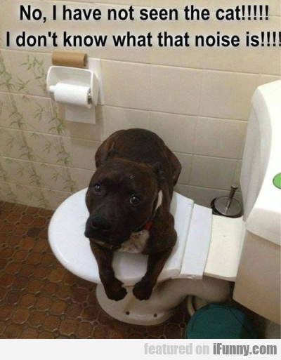 No I Have Not Seen The Cat