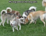 My Dog Peed At The Dog Park