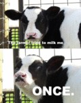 The Farmer Tried To Milk Me