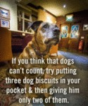 If You Think That Dogs Can't Count