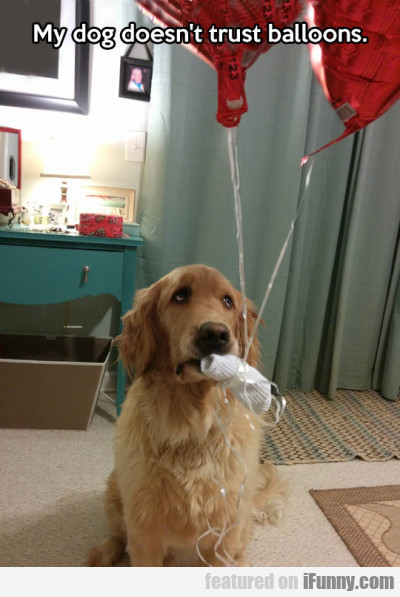 My Dog Doesn't Trust Balloons