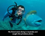 My Friend Went Diving In Australia And Caught...