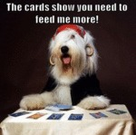 The Cards Show You Need To Feed Me More