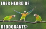 Ever Heard Of Deodorant