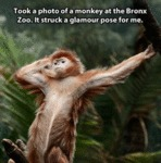 Took A Photo Of A Monkey At The Bronx