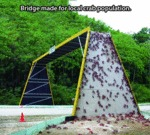 Bridge Made For Local Crab Population