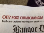 Cat? Fox? Chimichanga?