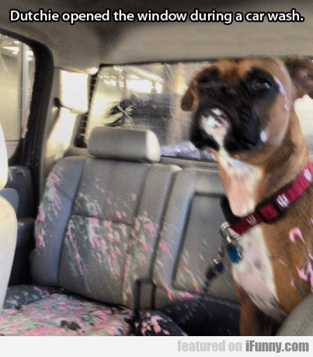 dutchie opened the window during the car wash