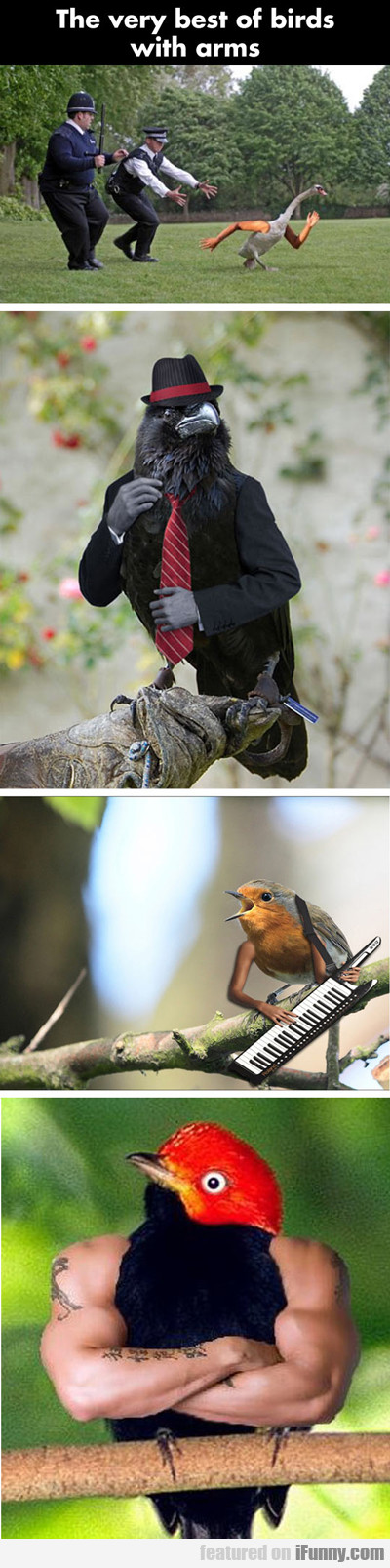 the very best of birds with arms...