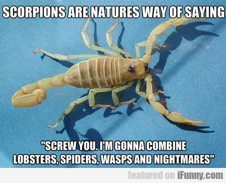 Scorpions Are Natures Way Of Saying...