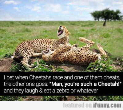 i bet when cheetahs race and one...
