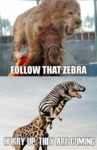 Follow That Zebra...