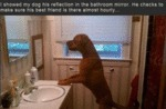 I Showed My Dog His Reflexion