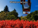 Whiskey On The Rocks...