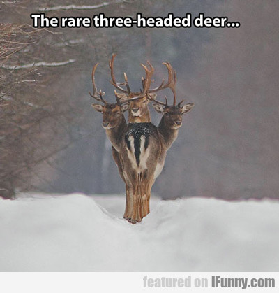 The Rare Three Headed Deer...