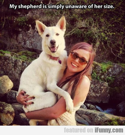 My Shepherd Is Simply Unaware Of Her Size