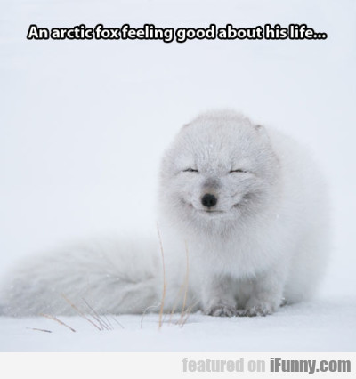 An Arctic Fox Feeling Good About His Life..