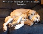 When There's Not Enough Room On The Couch...
