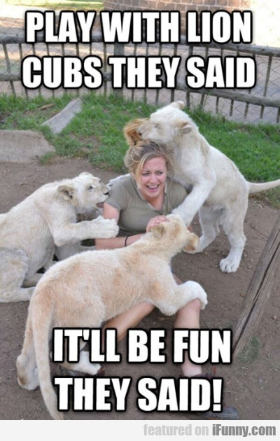 Play With Lion Cubs They Said
