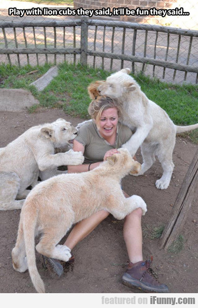 Play With Lion Cubs They Said, It'll Be Fun...