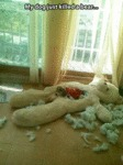 My Dog Just Killed A Bear