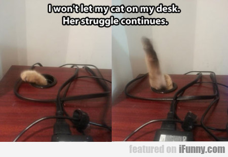 I Won't Let My Cat On My Desk