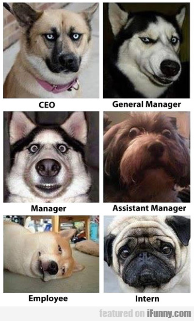 Ceo. General Manager