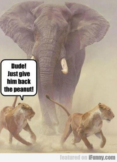 Dude! Just Give Him Back The Peanut
