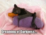 Dreaming Of Darkness