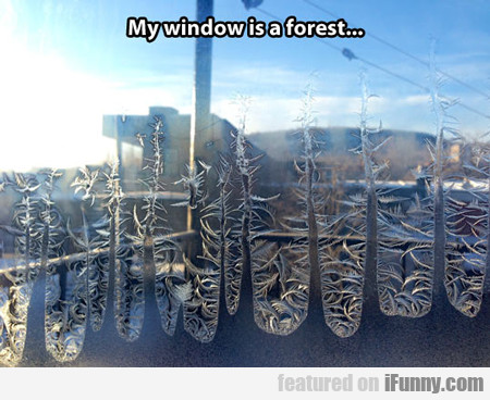 My Window Is A Forest...