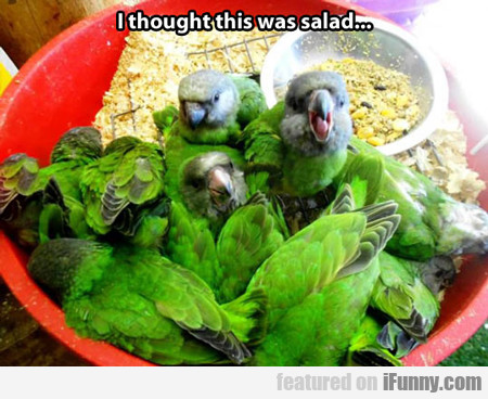 I Thought This Was Salad...