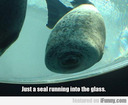 Just A Seal Running Into The Glass