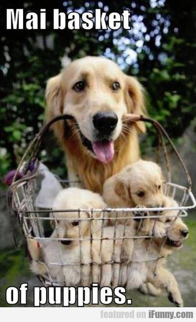 Mai Basket Of Puppies.