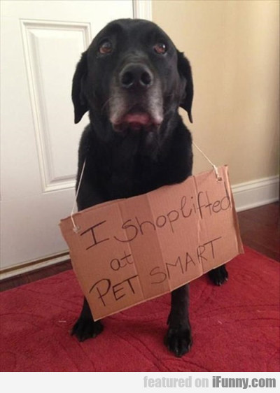 I shoplifted at pet smart