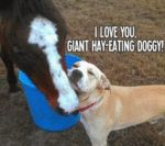 I Love You, Giant, Hay-eating