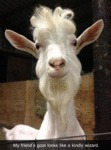 My Friend's Goat Looks Like A Kindly Wizard