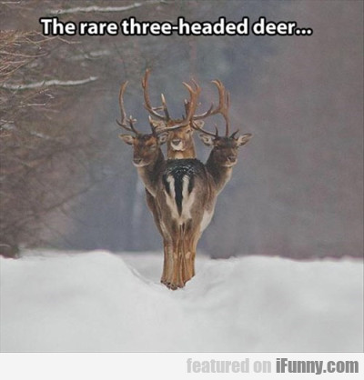 The Rare Three-headed Deer