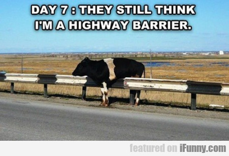 Day 7: They Still Think I'm A Highwaybarrier