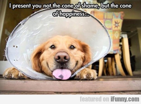 i present you not the cone of shame