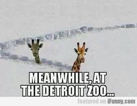 Meanwhile, At The Detroit Zoo