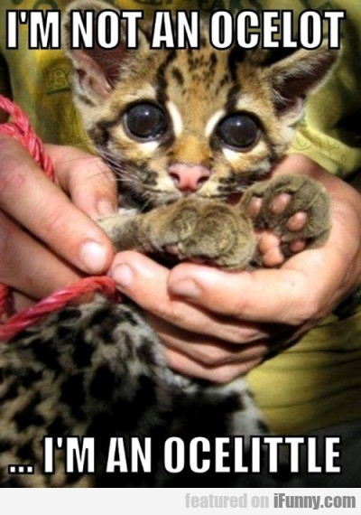 I'm Not An Ocelot