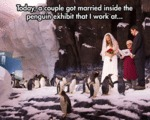 Today, A Couple Got Married Inside The Penguin...
