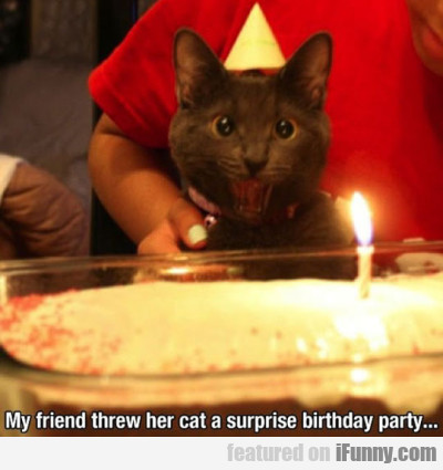 My friend threw her cat a surprise birthday party