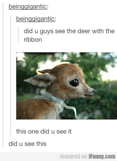 Did u guys see the deer with the ribbon?
