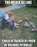"The Media Be Like "" Child Attacked By Pack Of..."""