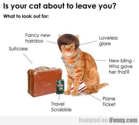 Is Your Cat Aboout To Leave You?