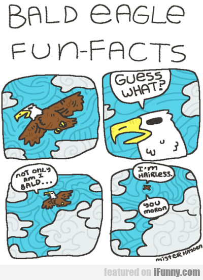 Bald Eagle Fun Facts
