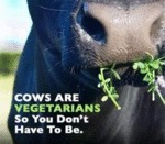 Cows Are Vegetarians So You Don't Have To Be...